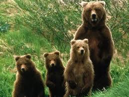 A medve meg az árnyéka